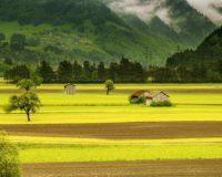 Βασίλης Α. Υψηλάντης: Οι ζημιές σε καλλιέργειες από ελάφια δεν καλύπτονται από τον ΕΛ.Γ.Α.