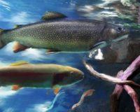 Πρωτοποριακή εταιρεία παραγωγής εμβολίων σε ψάρια ιδρύθηκε στην Κρήτη