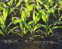 Ε.Ε. : Νέοι κανόνες για τη βιολογική γεωργία