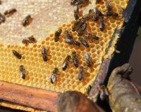 Τον περσινό χειμώνα χάθηκαν περισσότερες από 89.000 αποικίες μελισσών