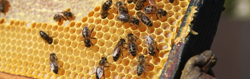 Έως 20/1/18 οι δηλώσεις διαχείμασης κυψελών από τους μελισσοκόμους