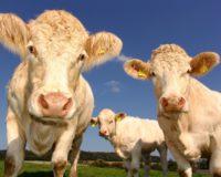 Το μυστικό για υψηλές αποδόσεις σε γάλα είναι η καλή διατροφή
