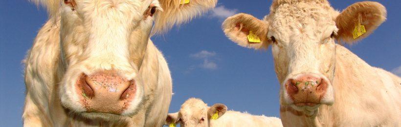 Ενημερωτική ημερίδα για την κτηνοτροφία πραγματοποιήθηκε στην Παραμυθιά με Παρουσία του Προέδρου του ΣΕΚ
