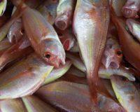 Σημαντικοί λόγοι για να τρώμε θαλασσινά και γιατί είναι καλό για την υγεία μας
