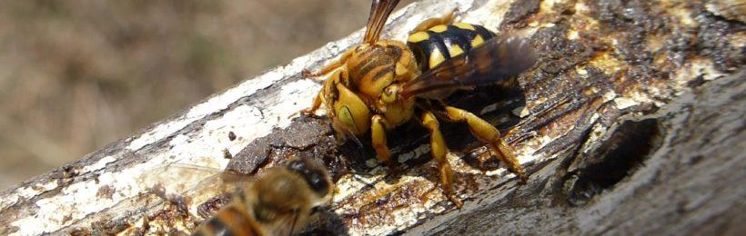Υπενθύμιση Υποχρεωτικής Δήλωσης Κατεχόμενων Κυψελών για τους Μελισσοκόμους