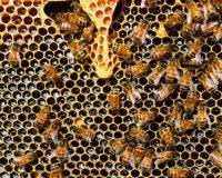 16η Γιορτή Μελισσοκόμων και Καλλιεργητών Έβρου