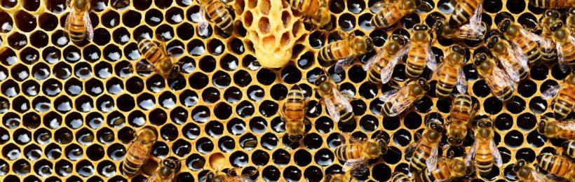 Πληρωμές σε Τρικαλινούς μελισσοκόμους δικαιούχους προγράμματος