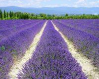 Το Υπουργείο Αγροτικής Ανάπτυξης και Τροφίμων δημιουργεί στρατηγικό σχέδιο ανάπτυξης αρωματικών και φαρμακευτικών φυτών