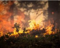 Πυροσβεστική: Προειδοποίηση προς πολίτες μετά από πυρκαγιά