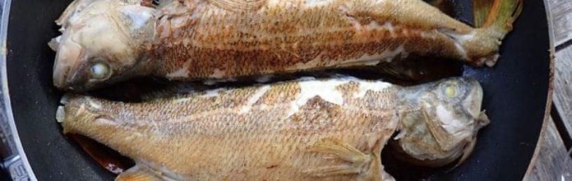 Σύμφωνα με νέα επιστημονική έρευνα η κατανάλωση ψαριών μειώνει τους πόνους της ρευματοειδούς αρθρίτιδας.