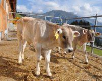Διευκρινιστική εγκύκλιος για την έκδοση άδειας διατήρησης κτηνοτροφικών εγκαταστάσεων