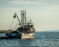 Προθεσμίες Αιτήσεων για το Επιχειρησιακό Πρόγραμμα Αλιείας & Θάλασσας 2014-2020
