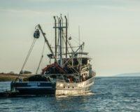 Μ. Βορίδης: «Έμπρακτη στήριξη της παράκτιας Αλιείας με 15 εκατ. ευρώ» – Ξεκίνησε ηυποβολή αιτήσεων