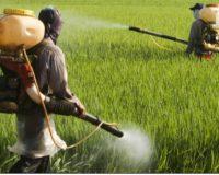 Κινέζοι επιστήμονες αναπτύσσουν ανακυκλώσιμο «έξυπνο» φυτοφάρμακο
