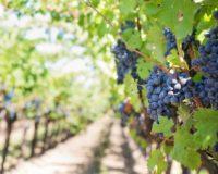 Μέσω ψηφιακής υπηρεσίας του υπουργείου οι δηλώσεις αποθεμάτων οίνου