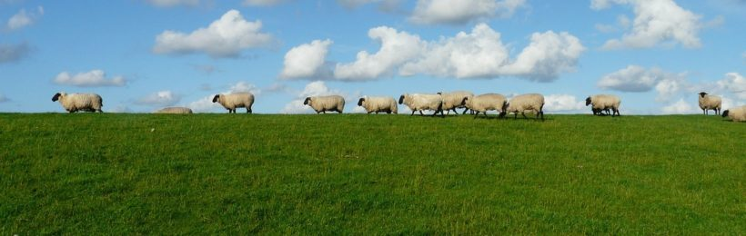 Μετακινήσεις ζώων σε βοσκοτόπους για τους θερινούς μήνες