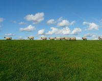 Πάνω από ένα εκατομμύριο ευρώ σε κτηνοτρόφους για την εξυγίανση του ζωικού κεφαλαίου