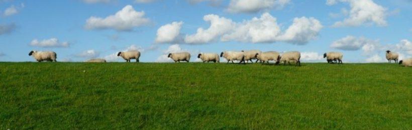 Εξοντωτικές οι ποινές σε κτηνοτρόφους λόγω της «τεχνικής λύσης» στα βοσκοτόπια