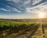 Υλοποιούνται Έργα 238 εκατ. ευρώ στον πρωτογενή τομέα στην Περιφέρεια Θεσσαλίας σε συνεργασία με το Υπουργείο Αγροτικής Ανάπτυξης.