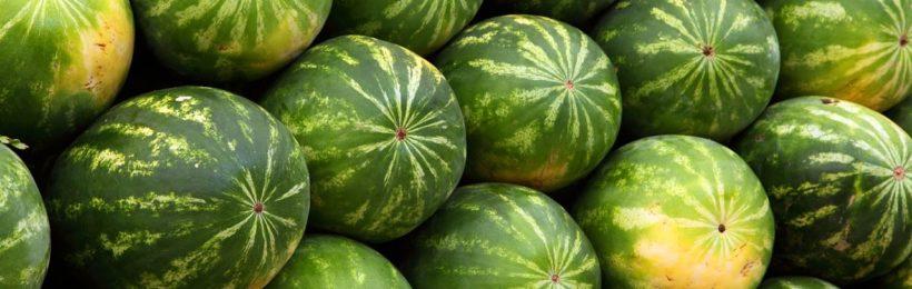 Σειρά για Θεσσαλικά πεπόνια και καρπούζια που βγαίνουν στην αγορά