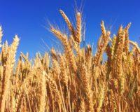 Ολοκληρώνεται η εξαγορά της Monsanto από την Bayer την Πέμπτη