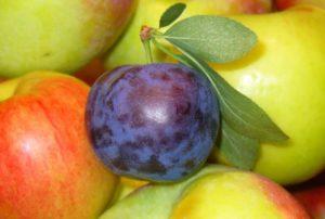 μήλα-δαμάσκηνο