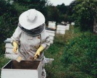 """Στο δεύτερο """"βάρεμα"""" του πεύκου οι τελευταίες ελπίδες των μελισσοκόμων"""