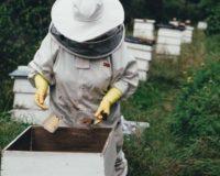 Δημοσιεύτηκε στο ΦΕΚ η υπουργική απόφαση της δράσης: 1.1 «Λειτουργία Κέντρων Μελισσοκομίας»