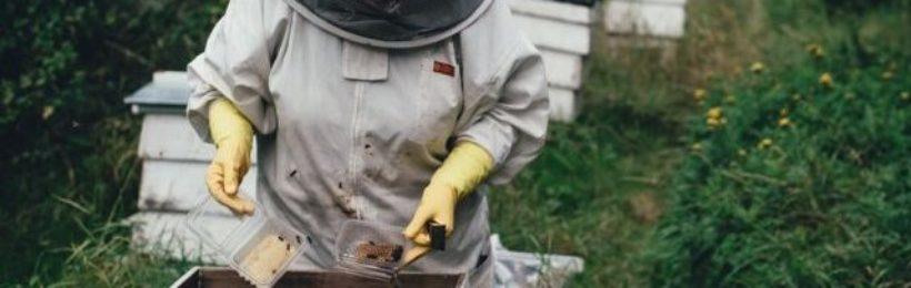 Επιστημονικές έρευνες έδειξαν οτι τα νεοκοτινοειδή φυτοφάρμακα βλάπτουν τις μέλισσες