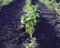 Προβληματισμένοι οι επιλαχόντες νέοι αγρότες στα σχέδια βελτίωσης
