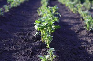 χωράφι, καλλιέργεια