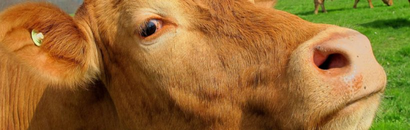 Καρδίτσα: Ενημέρωση για το πρόγραμμα των ελέγχων στις κτηνοτροφικές μονάδες για την οζώδη δερματίτιδα