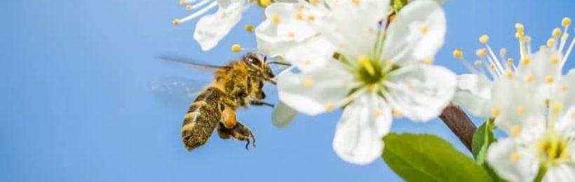 Και η μελισσοκομία στο στόχαστρο της κυβέρνησης