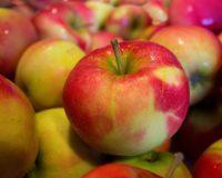 Παγετός και εμπάργκο μείωσαν και υποβάθμισαν την παραγωγή για τα μήλα…