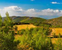 Απαγορεύεται η κυκλοφορία σε δάση στη Μεσσηνία