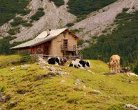 Δεν απαιτείται ως δικαιολογητικό η βεβαίωση χρήσεων γης για στάβλους εντός οικισμού