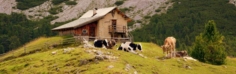 Προβληματισμένοι οι αγρότες και οι κτηνοτρόφοι του Ρεθύμνου σχετικά με το μέλλον του κλάδου τους.