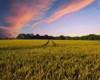 Στήριξη παρέχουν οι αγρότες στους πυρόπληκτους