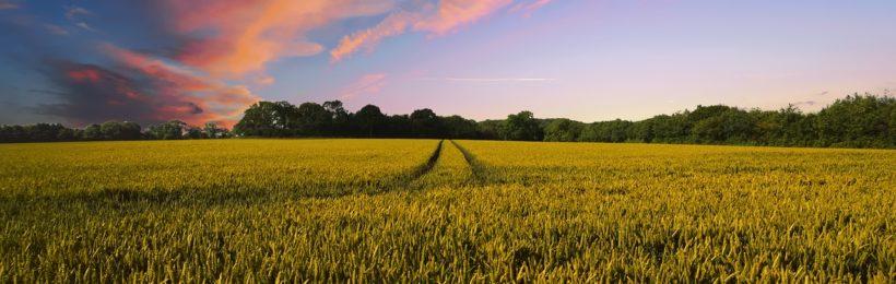Ενεργοποίηθηκε ο νόμος για την παραχώρηση εκτάσεων του ΥΠΑΑΤ σε κατά κύριο επάγγελμα αγρότες και σε ανέργους