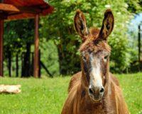 Έξυπνες επιδοτούμενες και καινοτόμες κτηνοτροφικές ιδέες