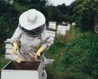 Πρόσκληση συμμετοχής στις δράσεις για Αντικατάσταση κυψελών και Νομαδική Μελισσοκομία από το Κέντρο Μελισσοκομίας Αττικής