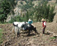 Σε δύο εβδομάδες το νέο καταστατικό φορέα κτηνοτρόφων