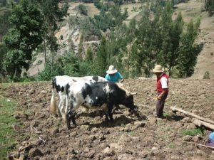 γεωργία,αγροτεμάχια, αγρότες