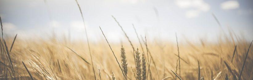 2ο Συνέδριο Εκμηχάνισης της Ελληνικής γεωργίας
