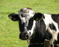 Έξυπνοι τρόποι ανακύκλωσης για τους κτηνοτρόφους