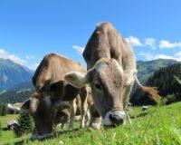 Βραβεία για την τοπική Φέτα ΠΟΠ και το Κατσικίσιο τυρί