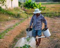 Χορήγηση βεβαίωσης εγγραφής στο Μ.Α.Α.Ε. και έλεγχο για την απόδοση της ιδιότητας του επαγγελματία αγρότη