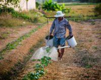 Εντός του Ιανουαρίου ο νόμος σχετικά με την εκπροσώπηση αγροτών και συνεταιρισμών