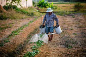farmer, αγρότης, ποτίζει, καλλιέργια