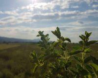 Από τις 28 Φεβρουαρίου ξεκινούν οι αιτήσεις για την βιολογική γεωργία